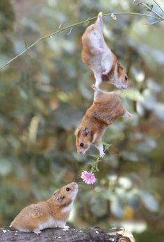 True love :-)