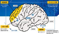 40代で英語を習得するのは遅すぎるか? | プレジデントオンライン | PRESIDENT Online