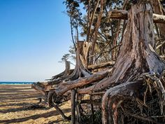 Want to live that island life without the airmiles? SA has many a beach that would fool anyone on Instagram - even your own brain. Island Life, The Fool, Brain, Live, Plants, Instagram, The Brain, Plant, Planting