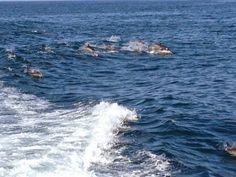 Island Adventures, tons of dolphins swimming along the boat.