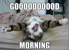 good morning & good morning + good morning quotes + good morning quotes inspirational + good morning quotes for him + good morning beautiful + good morning wishes + good morning images + good morning greetings Funny Cats, Funny Animals, Cute Animals, Hilarious, Silly Cats, Funny Stuff, Funny Good Morning Memes, Morning Humor, Hilarious Animals