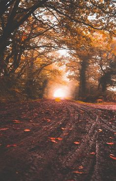 Landscape and Nature Autumn Photography, Landscape Photography, Autumn Aesthetic Photography, Yellow Leaf Trees, Green Trees, Autumn Cozy, Late Autumn, Autumn Morning, Fall Wallpaper