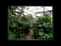 Indoor Forest Gardens Using Low Energy Climate Battery Technology - YouTube