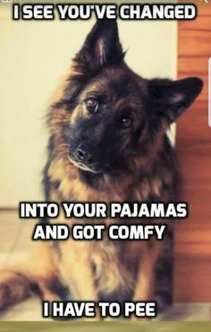 Wicked Training Your German Shepherd Dog Ideas. Mind Blowing Training Your German Shepherd Dog Ideas. Funny Dog Memes, Funny Animal Memes, Cute Funny Animals, Funny Animal Pictures, Dog Pictures, Funny Dogs, Funny Fails, Dog Humor, Dog Funnies