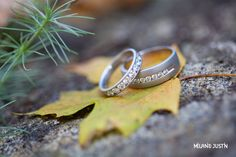 Fall - Rings