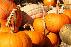 Cool Patch Pumpkins (Dixon, CA) has acres of pumpkin patches for you to walk through – orange pumpkins, white pumpkins, warty pumpkins. You can grab a wagon and even go pumpkin shopping if you'd like. Pumpkin World, Pumpkin Patches, Cool Patches, Autumn Harvest, White Pumpkins, Wonderful Time, Festive, Spaces