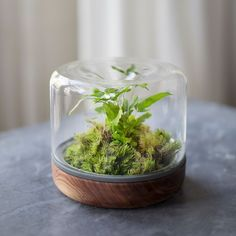 Can Keep These Terrarium Plants Alive - Houseplants wedding Terrarium succulentes Terrarium Diy, Closed Terrarium Plants, Terrarium Wedding, Terrarium Containers, Hanging Terrarium, Air Plant Terrarium, Wedding Plants, Glass Terrarium, Moss Garden