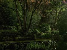 Sfumature di verde Fotografia di Luca Aveil, National Geographic Your Shot  I giardini Fitzroy a Melbourne, Australia.