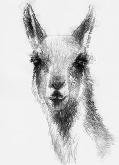 Last of the Guanaco, Artist Sean Briggs producing a sketch a day, prints available at https://www.etsy.com/uk/shop/SketchyLife #art #drawing #guanaco #http://etsy.me/1rARc0J