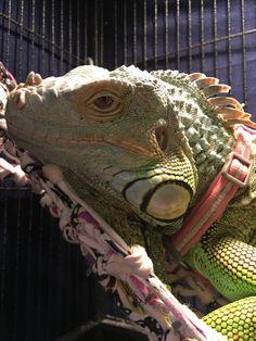 Jade is relaxing on her hammock.