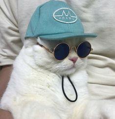 Un gato con estilo