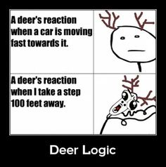 Deer logic... This is completely accurate because I have hit 2 deer and they both made the top face