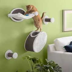 Shop Tucker Murphy Pet at Wayfair for a vast selection and the best prices online. Enjoy Free and Fast Shipping on most stuff, even big stuff! Cat Tree Condo, Cat Condo, Cat Tree Designs, Large Cat Tree, Cat Shelves, Shelf, Cat Playground, Cat Scratcher, Cat Room