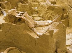 Mammoth Site - South Dakota. Have been there since they found the site and have gone back with every expansion they made with buildings and finding all the artifacts.........