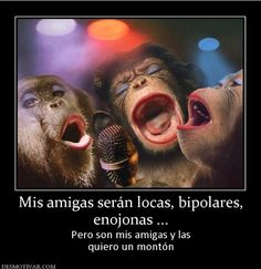 The perfect Macacos Cantores Singing Animated GIF for your conversation. Discover and Share the best GIFs on Tenor. Monkey Pictures, Funny Animal Pictures, Funny Animals, Cute Animals, Odd Pictures, Funny Pics, Karaoke, Silly Happy Birthday, Funny Birthday