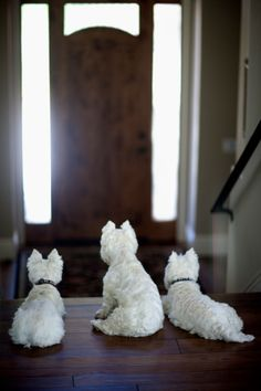 Three West Highland Terrier Dogs Wait By The Door Royalty-free Image | Getty Images | 89832853