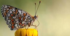 The butterfly's mistery...  ¡¿¿¡
