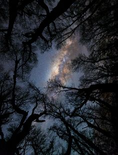 "opticcvlture: ""Mystical Forest by astroadventures.ru """