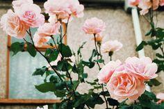 taylorswift lyrics//vintage pictures part I/II Little Flowers, Green Flowers, Flowers Nature, Beautiful Flowers, Prettiest Flowers, Romantic Flowers, Bouquets, Vintage Pictures, Garden Planning