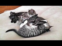 A Sleepin' & Fightin' Foster Kitten Cuddle Puddle