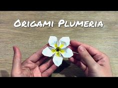 In this video, I'll show you how to make a beautiful origami plumeria flower. 🌸🥰🌈❤️ I'll show you step by step how to fold this paper plumeria flower. Diy Origami, Origami Star Paper, Origami Simple, Origami Ball, Origami Rose, Origami Butterfly, Origami Hearts, Oragami, Origami Instructions