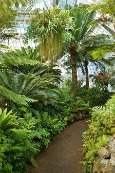 Ferns Garden, Conservatory Garden, Small Tropical Gardens, Tropical Plants, Modern Tropical, Tropical Garden Design, Garden Landscape Design, Tropical Backyard Landscaping, Jardin Luxuriant