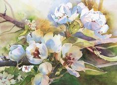 """Pear Blossoms"" by Kristi Grussendorf Watercolor ~ 11"" x 15"""