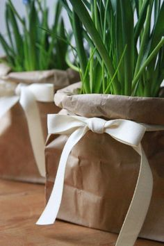 Brown paper bags are the perfect thing to cover up not so pretty pots- finish it with a ribbon and you have a picture perfect present, or plant for home!