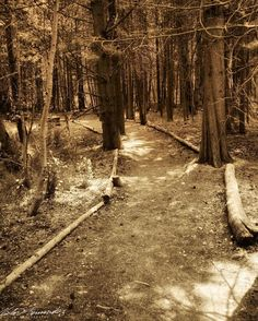 #tbt Even with the path clearly laid. I always try my best to get lost in #nature . There is where I find myself. #trees  #MammothLakes #Forest #Hike #landscape_lovers #Landscapes #MotherNature #Scenery #mountains #wanderlust  #Photography #nikon #beautiful #pretty #tree  #beauty #photooftheday  #Monochrome #sepia #sepiatone #blackandwhitephotography #nikon #photooftheday #nikonphotography