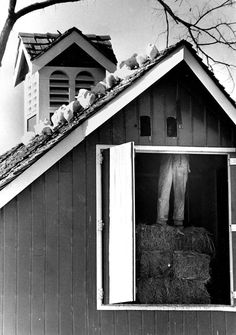 In this November 1989 photo, a workman, using hay bales as a ladder, cuts holes in the loft of the red barn at the Henry Doorly Zoo & Aquarium. This was to allow the pigeons to come and go as they pleased during the winter months. THE WORLD-HERALD