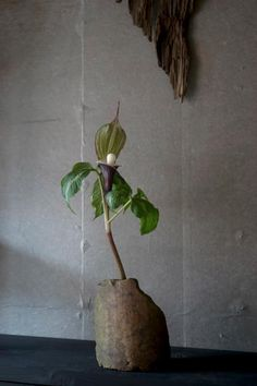 Florist   Mitate