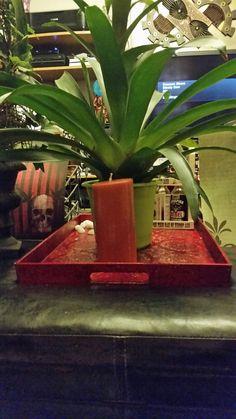 Check out this item in my Etsy shop https://www.etsy.com/ca/listing/260924580/mystic-babylon-cinnamon-clove-pillar