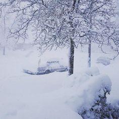 Blizzard bitches #colorado #blizzard2016 #denver #snowday #snow #cold #coloradoblizzard2016 by salvadordaliparton