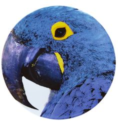 Olhar o Brasil - Charger Plate Blue Macaw