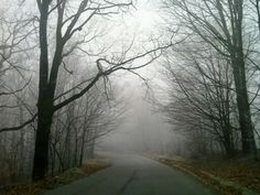 Foggy winter