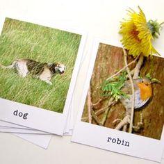 Polaroid Animal Flash Cards {Free Stuff}