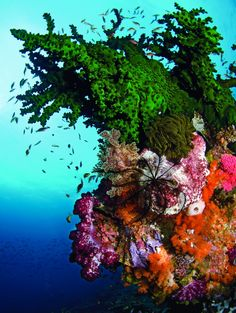 This picture said Indonesia the second I saw it! Stunning Reef in Indonesia (Tanya G. Burnett)