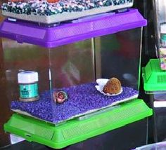 Proper Hermit Crab Pet Care : Avoid gravel and no calci-sand!