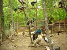 how to build a peacock aviary - Google Search Peacock, Bird, Google Search, Building, House, Animals, Animales, Home, Animaux