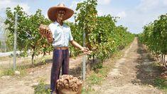 Savalan Aspi Winery is located in Gabala, northern Azerbaijan. Mass Culture, Wine Tourism, Wine Education, Port Wine, Wine List, Sauvignon Blanc, Wine Making, Night Life, Need To Know