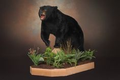 full body black bear mounts - HuntingNet.com Forums