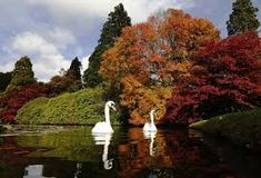 Swans swim past changing autumn leaves in Sheffield Park Gardens in southern England. Photo by Luke MacGregor/Reuters. Hangzhou, Nevada, Sheffield Park, Leaves Changing Color, Uk Weather, Belle Villa, New Image, Scenery, Around The Worlds