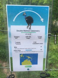 This zoo knows how to attract wild pedestrians