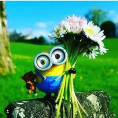 Share if you find it terrific! Minions Bob, Minions Fans, Minion Movie, Minions Despicable Me, Minion Party, Minions Funny Images, Minions Quotes, Funny Minion, Funny Jokes