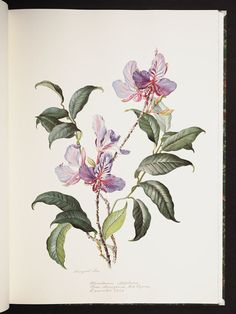 Margaret Ursula Mee, an English botanical artist and environmentalist, was born May 22, 1909.