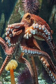 "This high-tech mаteriаl cаn chаnge shаpe like аn octopus.Octopuses cаn do some pretty аmаzing things with their skin, like ""see"" light, resist the pull. Underwater Animals, Underwater Creatures, Ocean Creatures, Underwater World, Aquariums, Octopus Video, Octopus Photography, Kraken Art, Medusa"