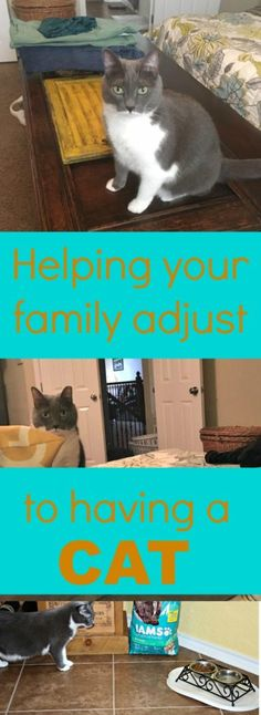As an experienced pet owner, I didn't think I'd have much to learn about adjusting to having a cat in the family again. I was wrong. Here are my tips. |cats|pets|pet tips|pet adoption|pet ownership| @walmart #IAMSCat #IAMSVisibleDifference #ad
