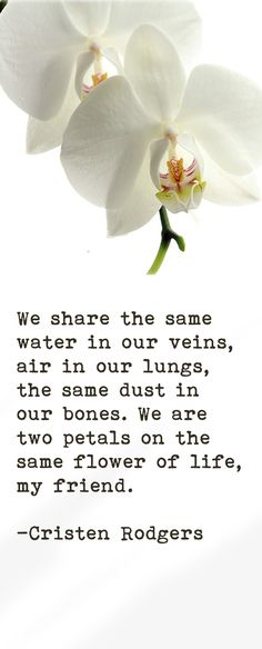 ...We are two pedals on the same flower of life, my friend