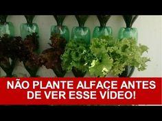Como Plantar Alface Em Garrafa Pet/vasos (processo completo) | Horta Vertical do Tuím - YouTube