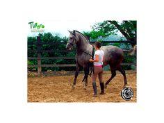 Código equino: Lenguaje corporal y medicina
